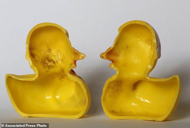 Các nhà khoa học tìm ra cả ổ vi khuẩn mang mầm bệnh trong vịt cao su - thứ mà trẻ nào cũng thích chơi khi tắm - Ảnh 2.