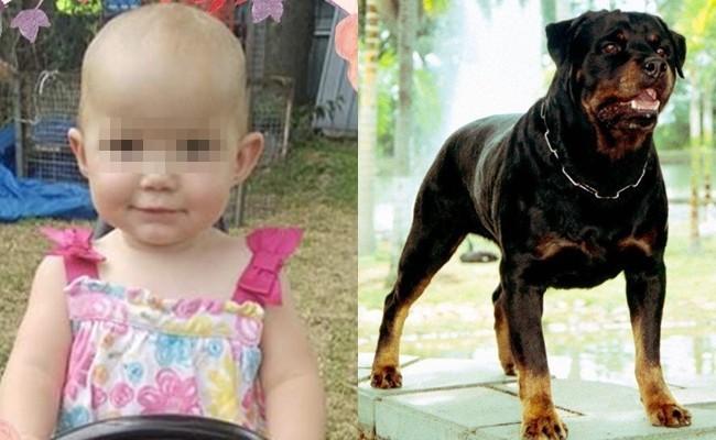 Dắt con gái 1 tuổi về nhà bà ngoại, bà mẹ đau đớn khi chứng kiến con bị chó hàng xóm tấn công tới tử vong - Ảnh 3.