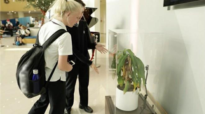 Chỉ với 2 chậu cây, thử nghiệm xã hội độc đáo lấy chủ đề bắt nạt học đường cho ra kết quả khiến ai cũng mắt tròn mắt dẹt - Ảnh 6.