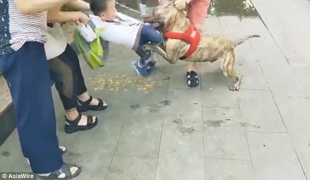 Bé trai bị chó dữ cắn chặt trên phố không chịu buông - Ảnh 3.