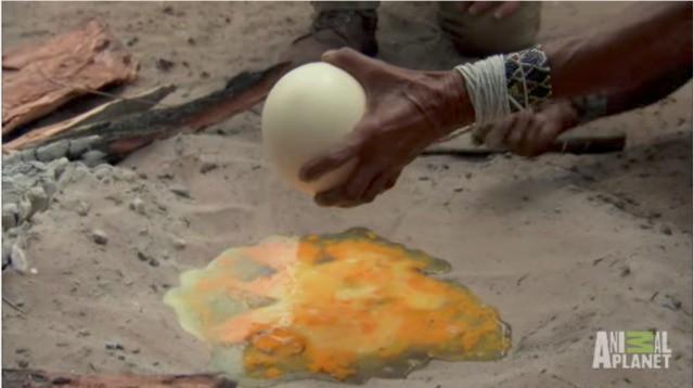 Nhờ nấu giúp quả trứng đà điểu, người đàn ông đinh ninh bà lão sẽ dùng chảo không ngờ bà đổ hết trứng lên cát - Ảnh 5.