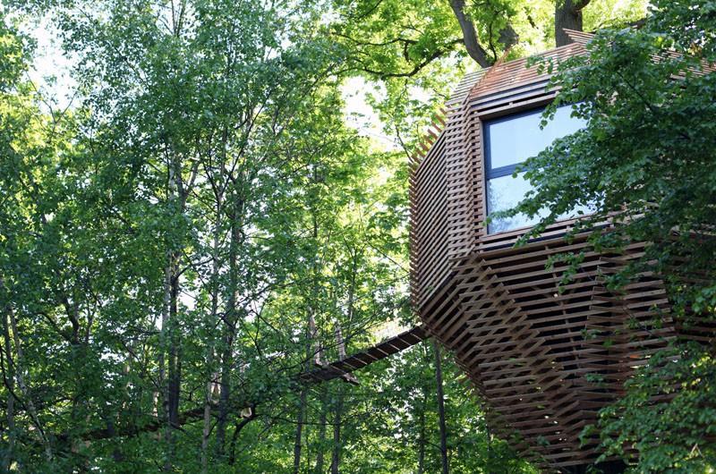 Ngôi nhà trên cây nằm giữa rừng xanh có đầy đủ tiện nghi như khách sạn - Ảnh 2.