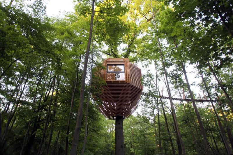 Ngôi nhà trên cây nằm giữa rừng xanh có đầy đủ tiện nghi như khách sạn - Ảnh 3.