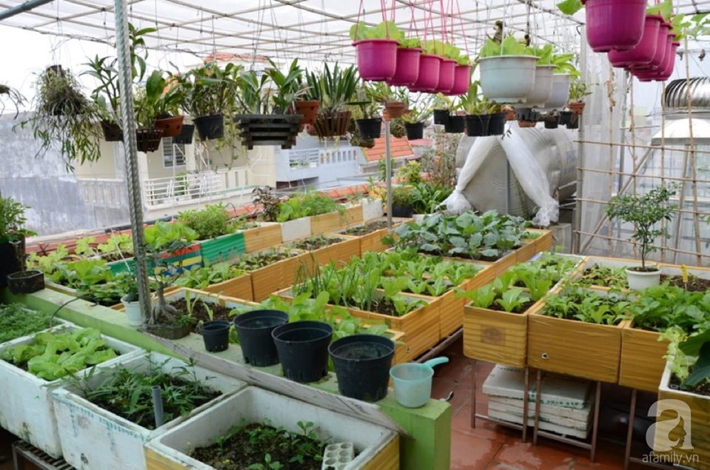 Khu vườn trồng rau sạch quy củ như một trang trại thật sự trên sân thượng của bà mẹ 2 con ở Hải Phòng  - Ảnh 1.