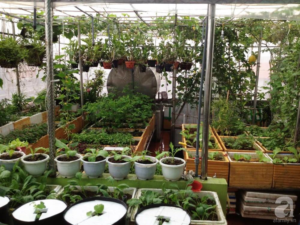 Khu vườn trồng rau sạch quy củ như một trang trại thật sự trên sân thượng của bà mẹ 2 con ở Hải Phòng  - Ảnh 3.