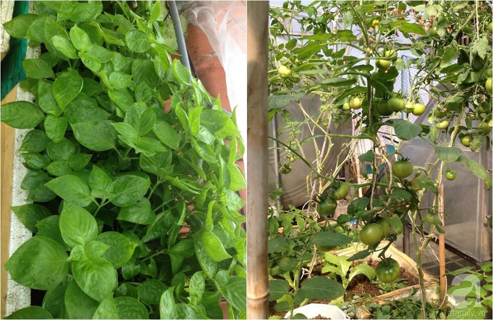 Khu vườn trồng rau sạch quy củ như một trang trại thật sự trên sân thượng của bà mẹ 2 con ở Hải Phòng  - Ảnh 10.