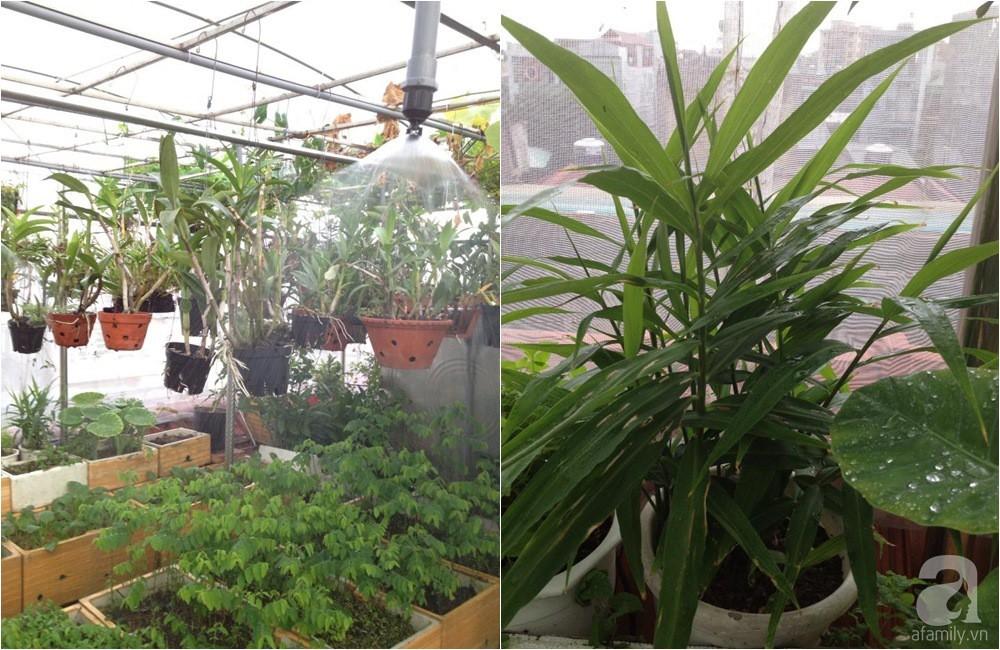 Khu vườn trồng rau sạch quy củ như một trang trại thật sự trên sân thượng của bà mẹ 2 con ở Hải Phòng  - Ảnh 12.