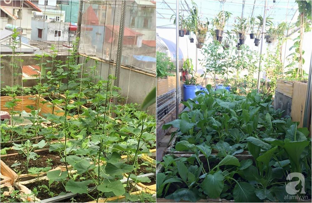 Khu vườn trồng rau sạch quy củ như một trang trại thật sự trên sân thượng của bà mẹ 2 con ở Hải Phòng  - Ảnh 4.