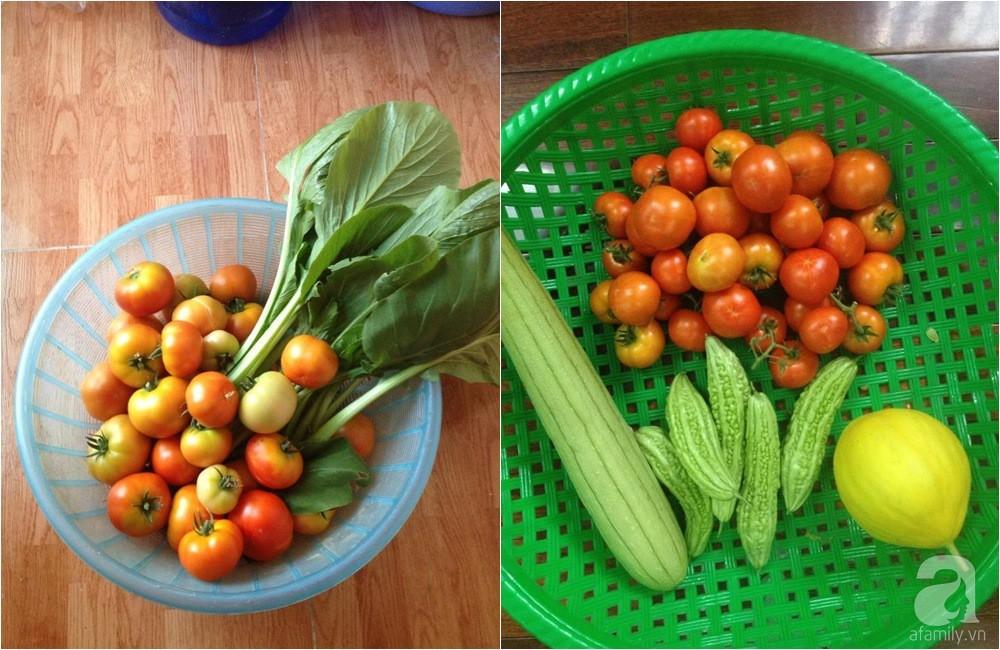 Khu vườn trồng rau sạch quy củ như một trang trại thật sự trên sân thượng của bà mẹ 2 con ở Hải Phòng  - Ảnh 18.