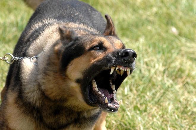 Hàng loạt trẻ bị chó cắn nát mặt, đứt khí quản, tử vong: Báo động đỏ nhiều nhà nuôi chó - Ảnh 2.