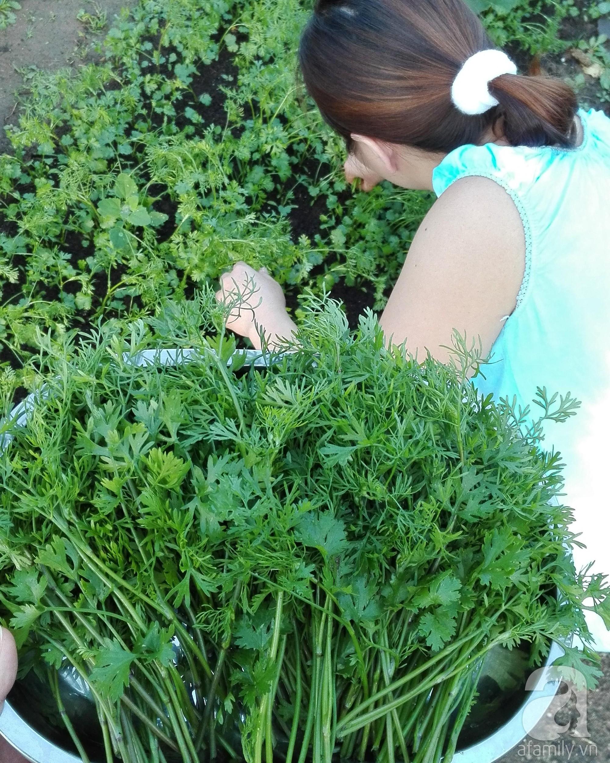 Choáng ngợp trước vườn rau sạch rộng 600m² với đủ rau trái Việt của bà mẹ trẻ ở nước ngoài - Ảnh 9.