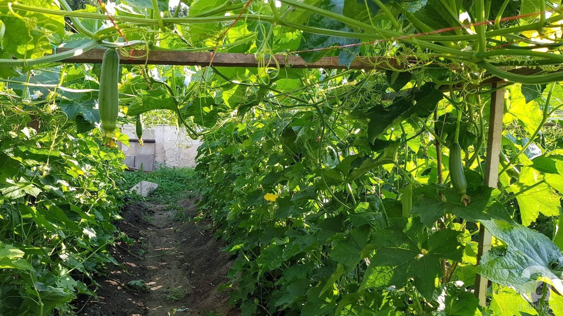 Choáng ngợp trước vườn rau sạch rộng 600m² với đủ rau trái Việt của bà mẹ trẻ ở nước ngoài - Ảnh 4.