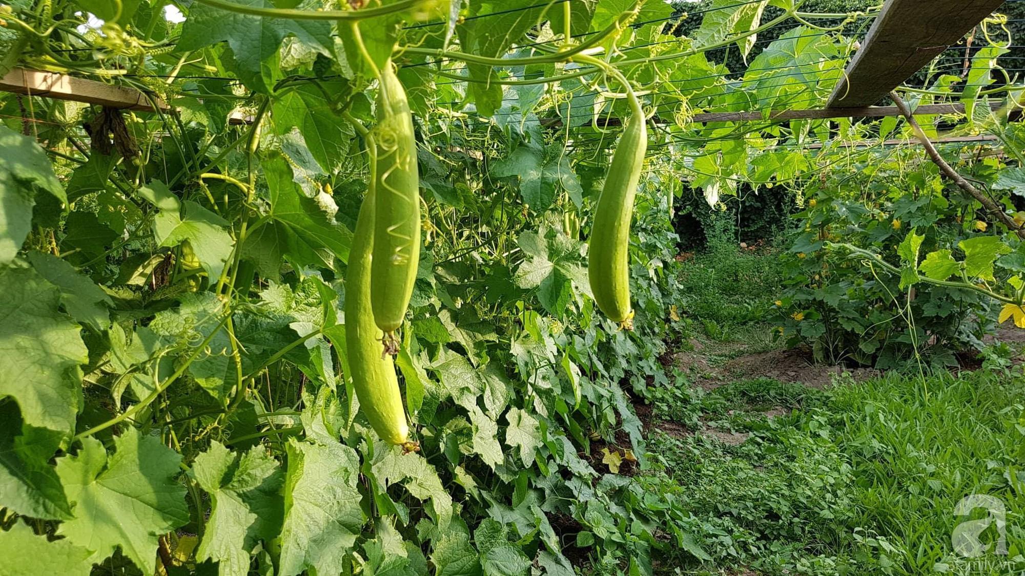 Choáng ngợp trước vườn rau sạch rộng 600m² với đủ rau trái Việt của bà mẹ trẻ ở nước ngoài - Ảnh 2.