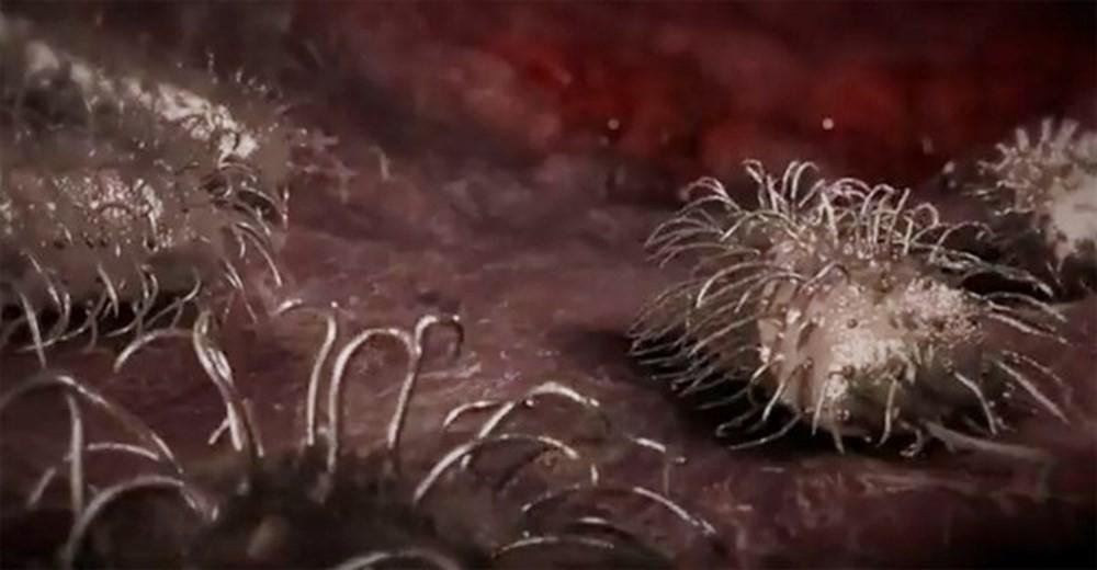 Xuất hiện thêm người tử vong do vi khuẩn ăn thịt người sau khi ăn hàu sống: Đây là những gì bạn cần biết! - Ảnh 2.