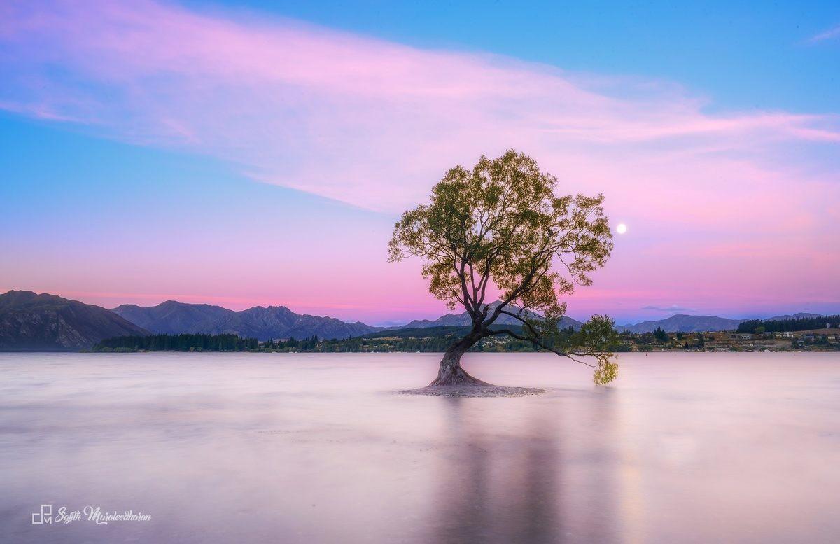 Những cái cây cô độc nhất hành tinh: Vẻ đẹp của sự lẻ loi khiến chúng trở nên nổi tiếng - Ảnh 1.