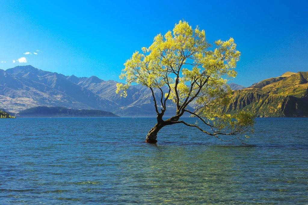 Những cái cây cô độc nhất hành tinh: Vẻ đẹp của sự lẻ loi khiến chúng trở nên nổi tiếng - Ảnh 2.