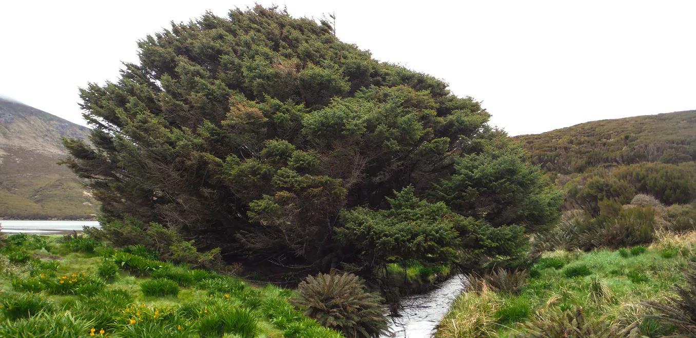 Những cái cây cô độc nhất hành tinh: Vẻ đẹp của sự lẻ loi khiến chúng trở nên nổi tiếng - Ảnh 11.