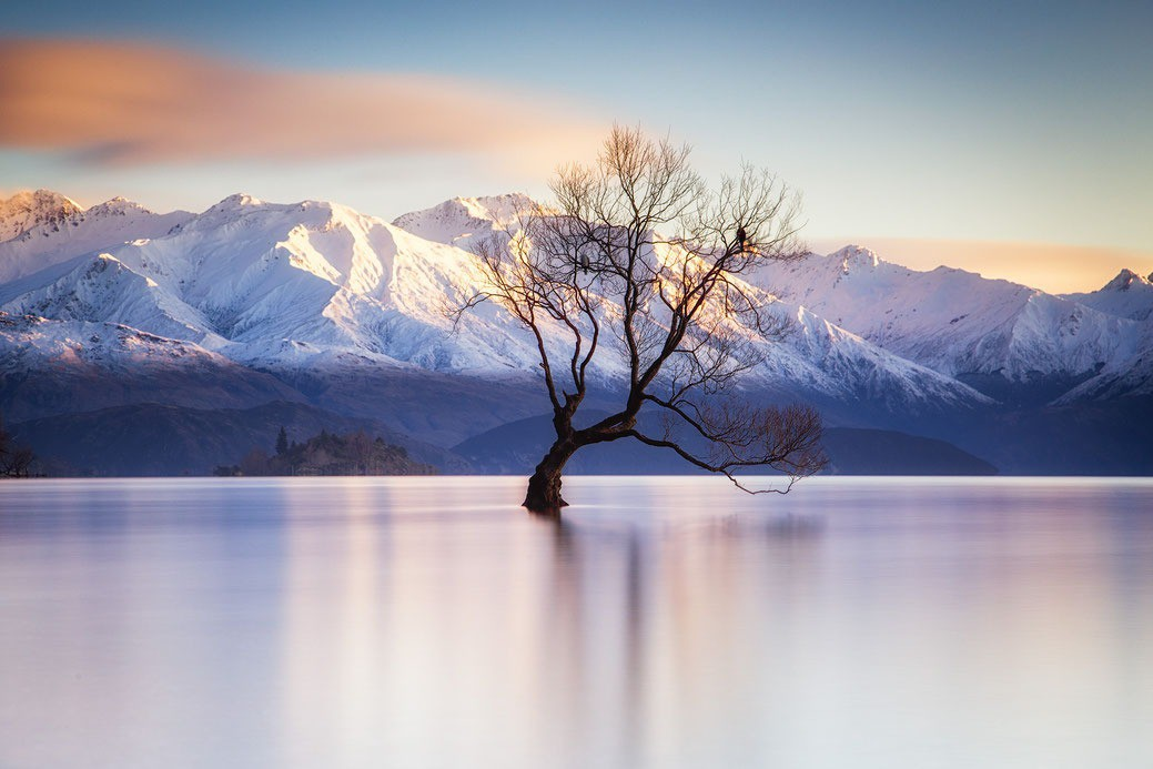 Những cái cây cô độc nhất hành tinh: Vẻ đẹp của sự lẻ loi khiến chúng trở nên nổi tiếng - Ảnh 3.