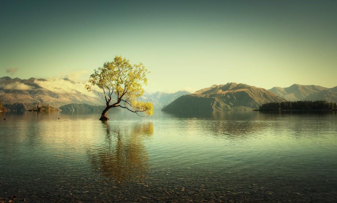 Những cái cây cô độc nhất hành tinh: Vẻ đẹp của sự lẻ loi khiến chúng trở nên nổi tiếng - Ảnh 4.