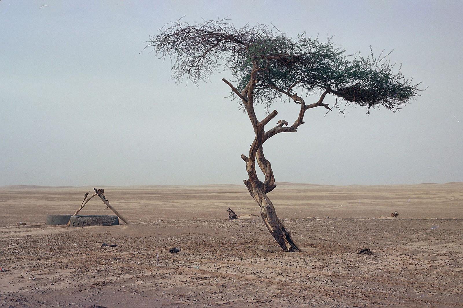 Những cái cây cô độc nhất hành tinh: Vẻ đẹp của sự lẻ loi khiến chúng trở nên nổi tiếng - Ảnh 6.