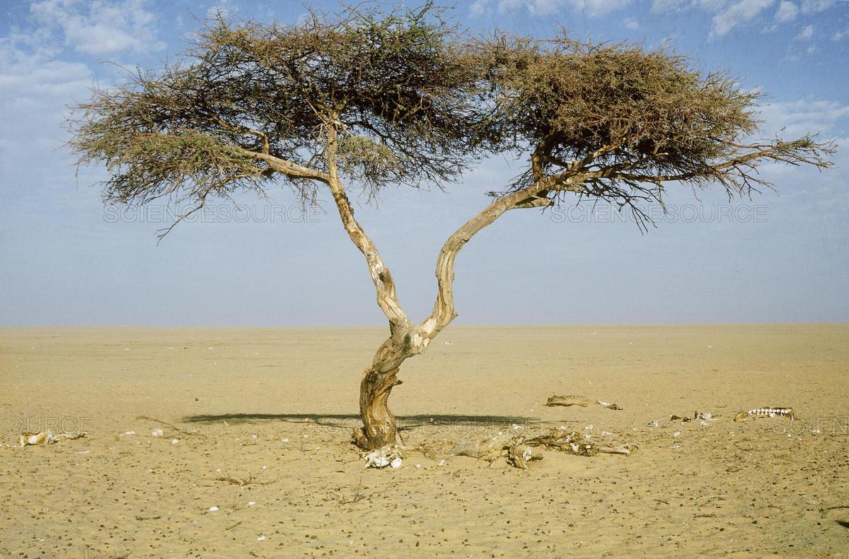 Những cái cây cô độc nhất hành tinh: Vẻ đẹp của sự lẻ loi khiến chúng trở nên nổi tiếng - Ảnh 7.