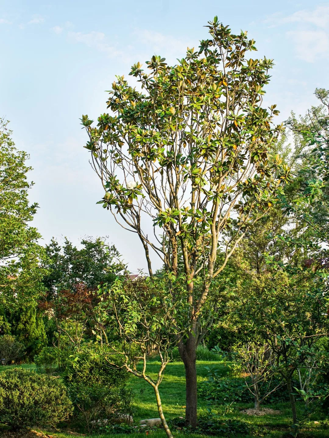 Ngôi nhà vườn rộng 4000m² đẹp bình yên được cải tạo từ mảnh đất toàn rác nhờ sự đồng lòng của hai vợ chồng bỏ phố về quê - Ảnh 17.