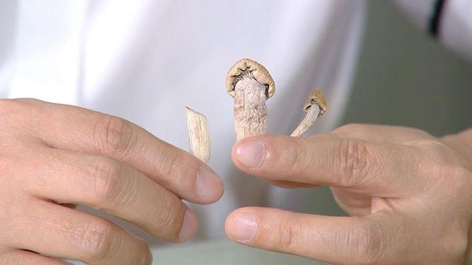 Cảnh báo: Nấm ma thuật mà giới trẻ đang săn lùng là loại ma túy cực độc đe dọa sức khỏe suy kiệt nhanh chóng - Ảnh 1.
