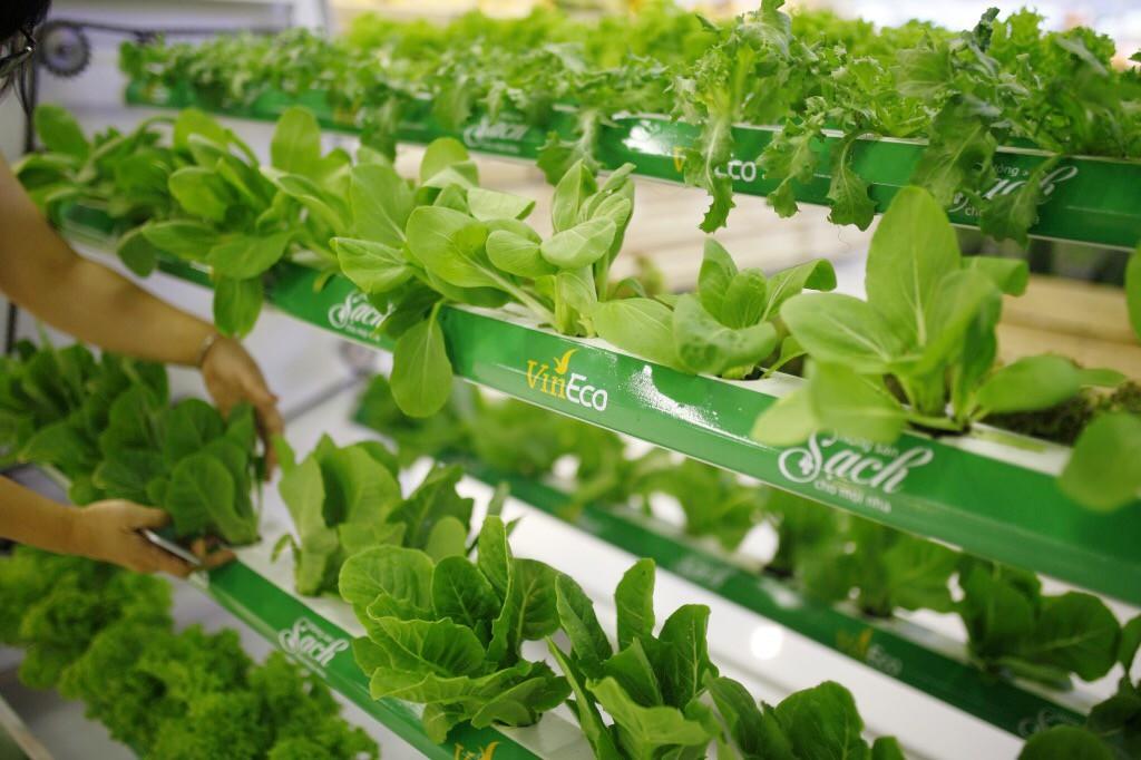 VinMart trong tòa nhà cao nhất Việt Nam: Khi siêu thị không chỉ đẹp, tiện lợi mà còn là sân chơi cho cả gia đình - Ảnh 21.