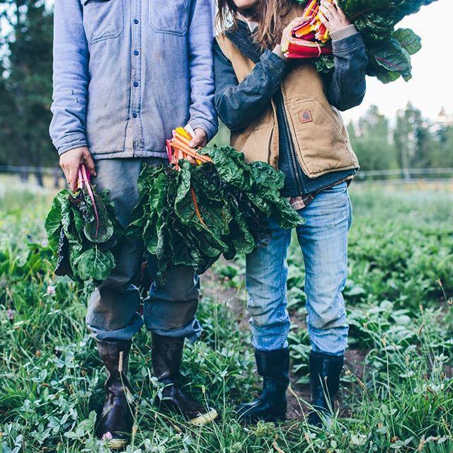 Trang trại toàn rau xanh, cây trái mát lành của cặp vợ chồng blogger ẩm thực thích sống chỉ để vui chơi khiến ai cũng ước ao, xao xuyến - Ảnh 7.