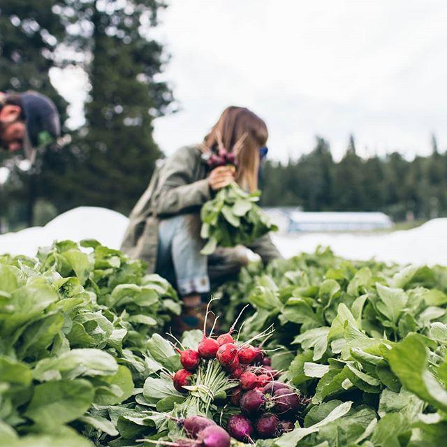 Trang trại toàn rau xanh, cây trái mát lành của cặp vợ chồng blogger ẩm thực thích sống chỉ để vui chơi khiến ai cũng ước ao, xao xuyến - Ảnh 4.