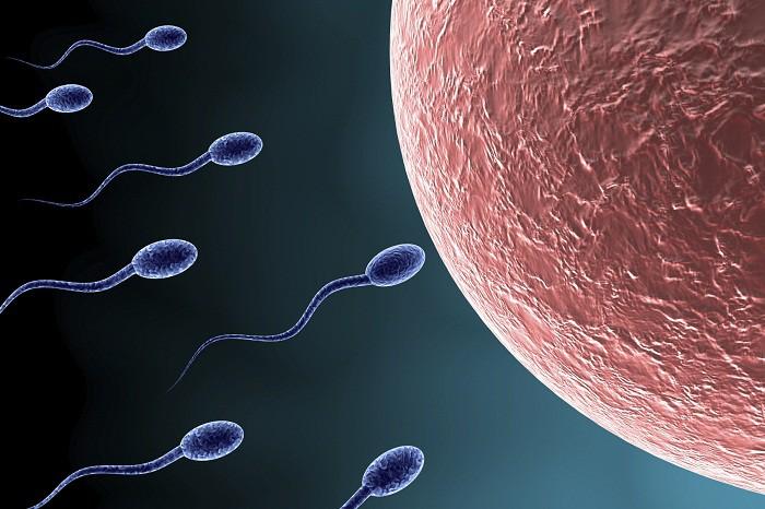 Tận mắt xem cuộc đua của hàng triệu tinh trùng gặp trứng và sự phát triển của thai nhi trong bụng mẹ - Ảnh 2.