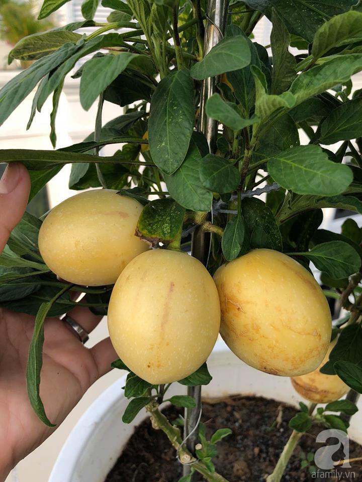 Vườn rau trên sân thượng bạt ngàn rau quả mùa hè của bà mẹ 3 con ở Hải Phòng - Ảnh 20.
