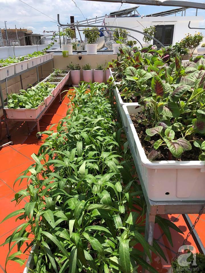 Vườn rau trên sân thượng bạt ngàn rau quả mùa hè của bà mẹ 3 con ở Hải Phòng - Ảnh 9.