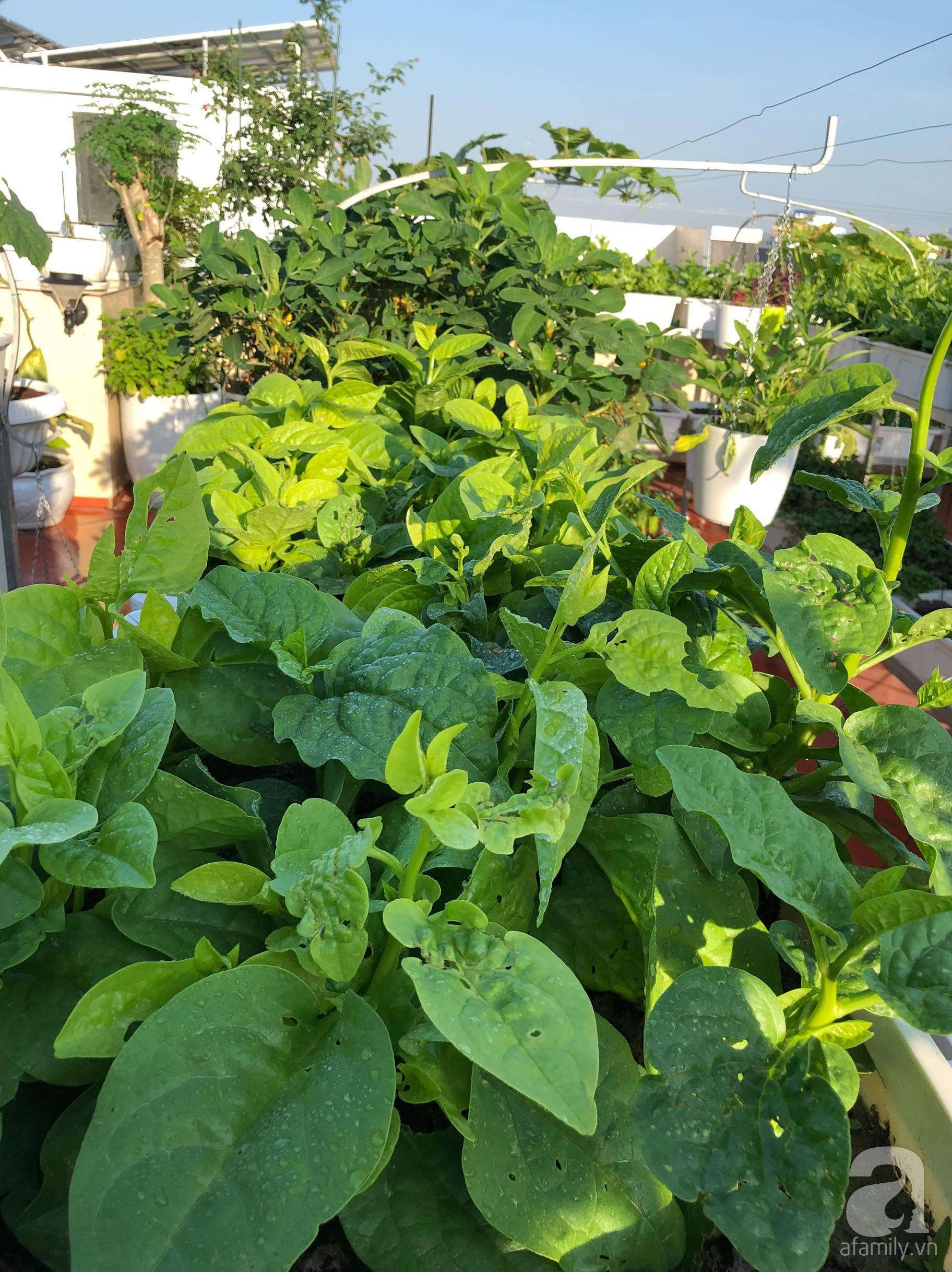 Vườn rau trên sân thượng bạt ngàn rau quả mùa hè của bà mẹ 3 con ở Hải Phòng - Ảnh 8.