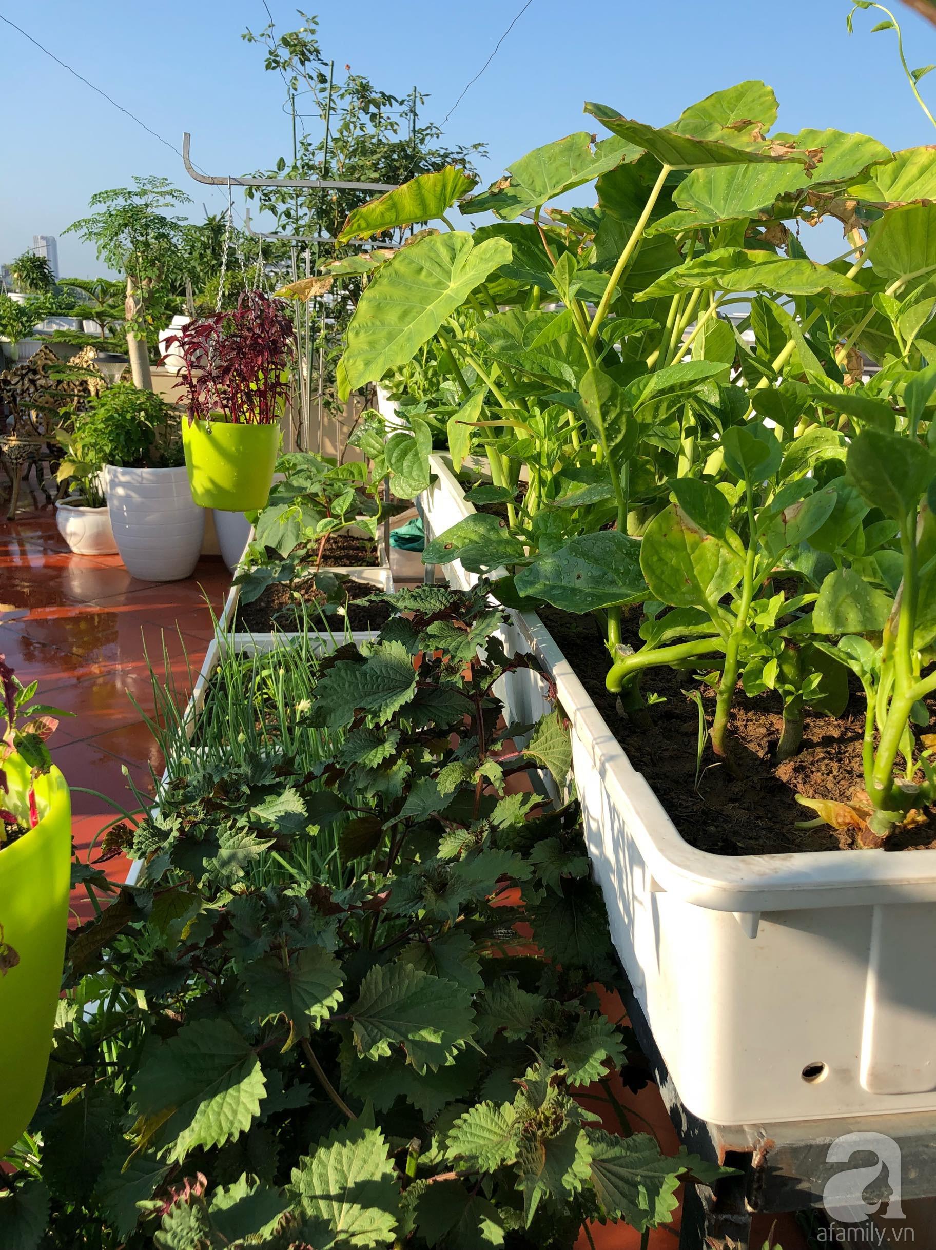 Vườn rau trên sân thượng bạt ngàn rau quả mùa hè của bà mẹ 3 con ở Hải Phòng - Ảnh 7.