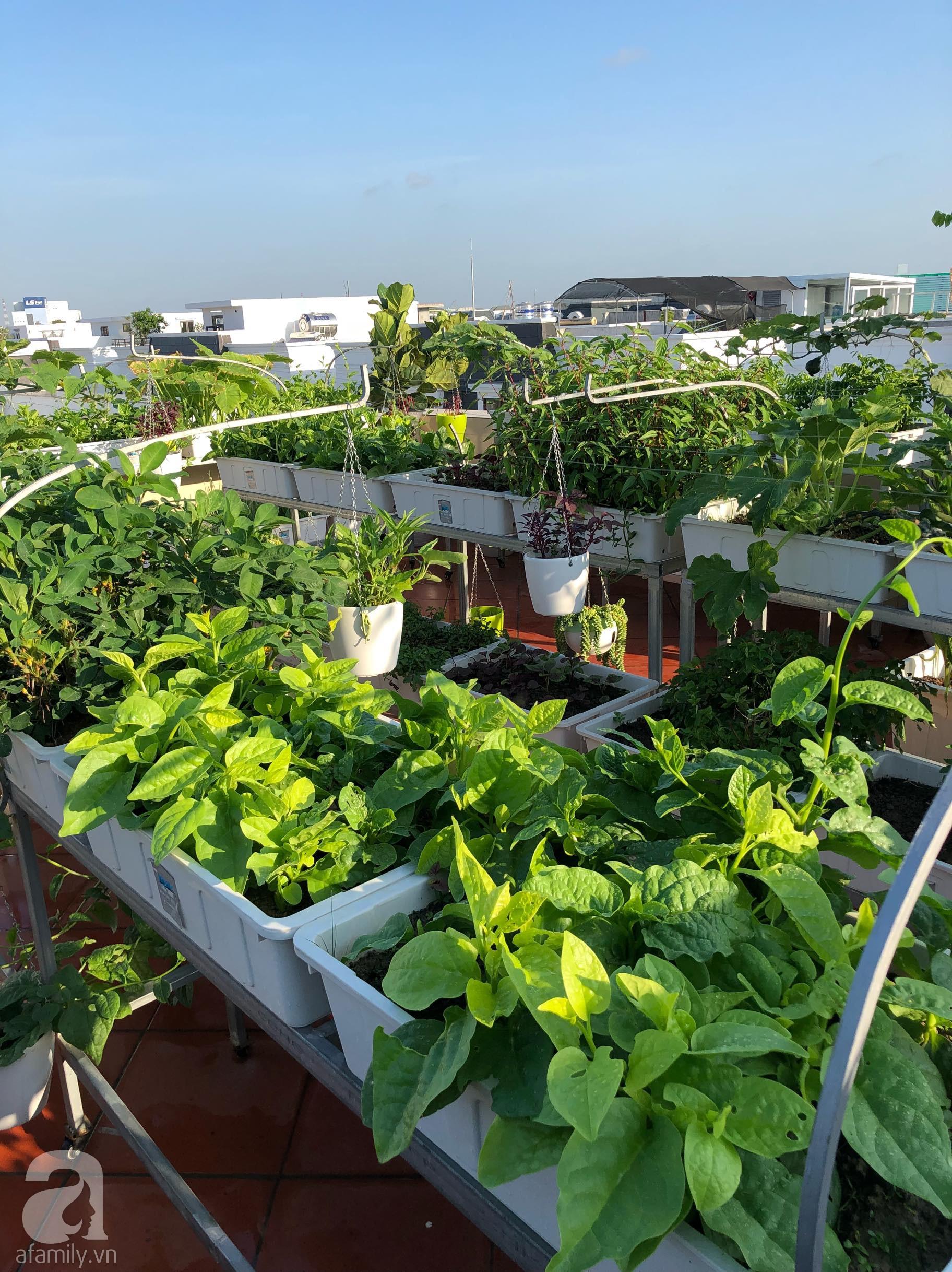 Vườn rau trên sân thượng bạt ngàn rau quả mùa hè của bà mẹ 3 con ở Hải Phòng - Ảnh 5.