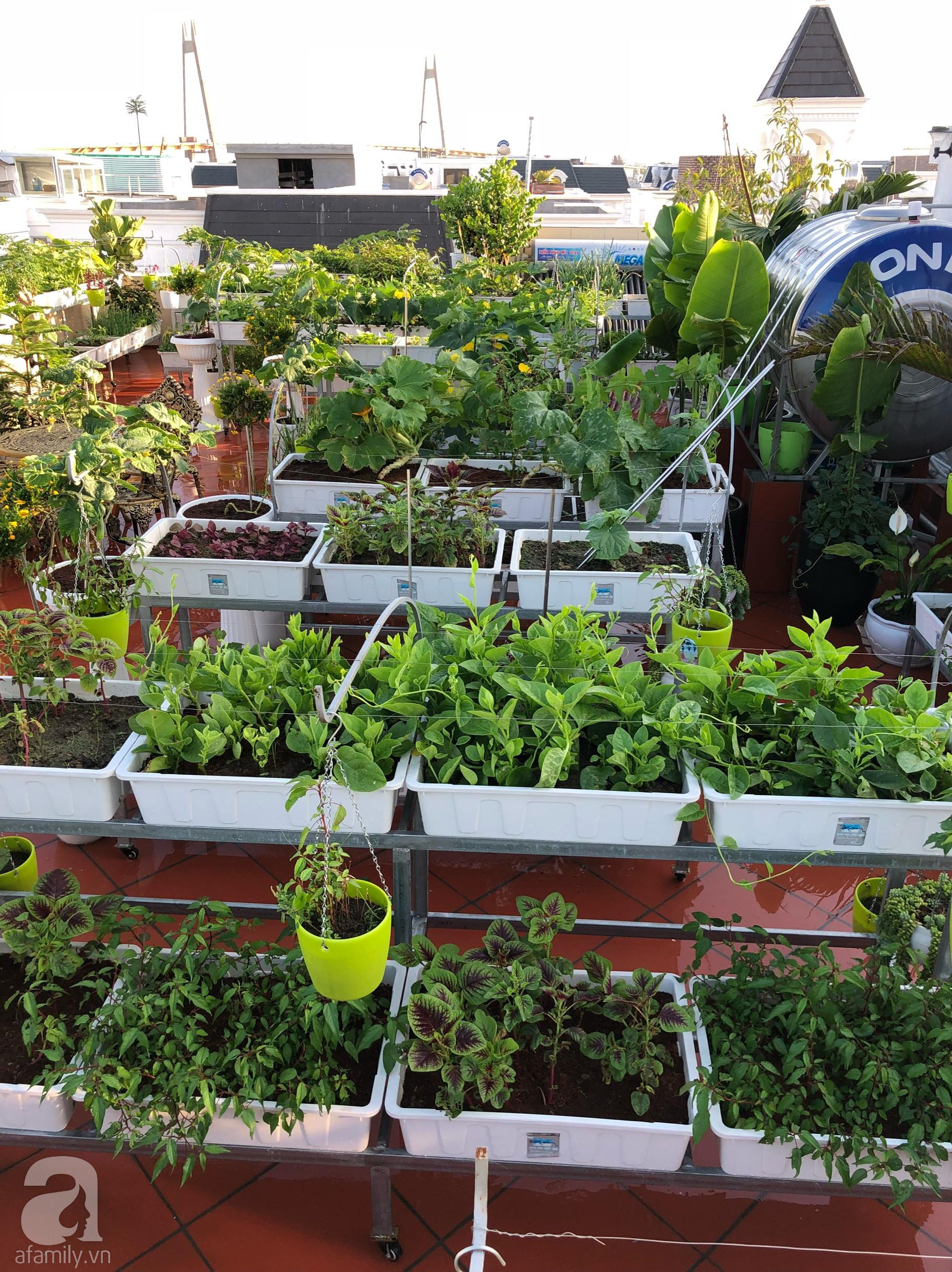 Vườn rau trên sân thượng bạt ngàn rau quả mùa hè của bà mẹ 3 con ở Hải Phòng - Ảnh 4.