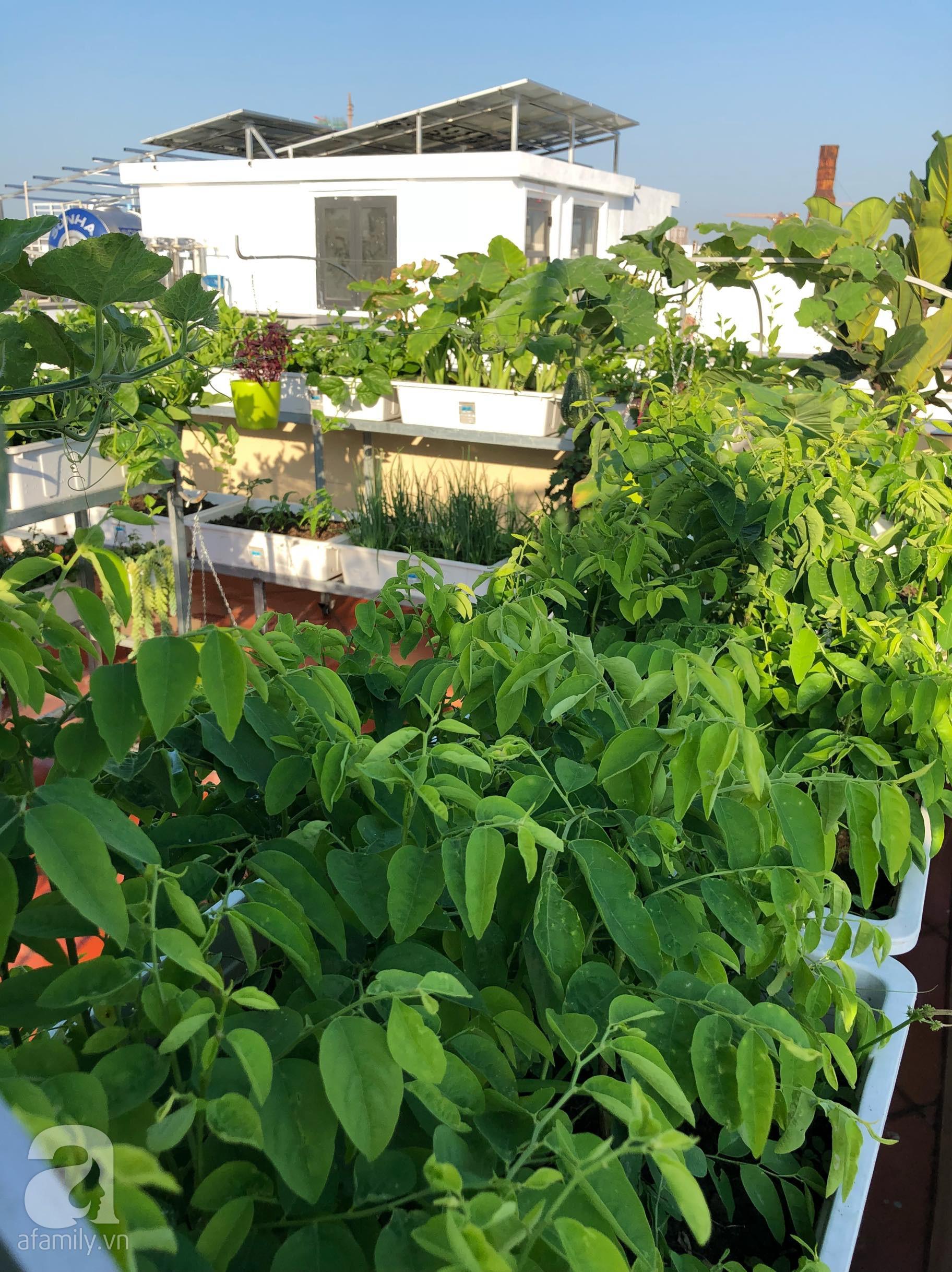 Vườn rau trên sân thượng bạt ngàn rau quả mùa hè của bà mẹ 3 con ở Hải Phòng - Ảnh 2.