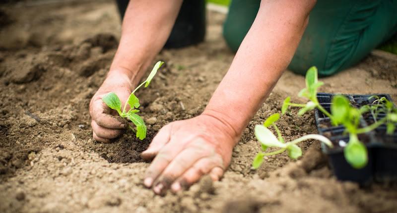 Nhờ những chiếc máy trồng và thu hoạch rau siêu nhanh kiểu này, công cuộc làm vườn sẽ trở nên nhàn nhã đến không ngờ - Ảnh 1.