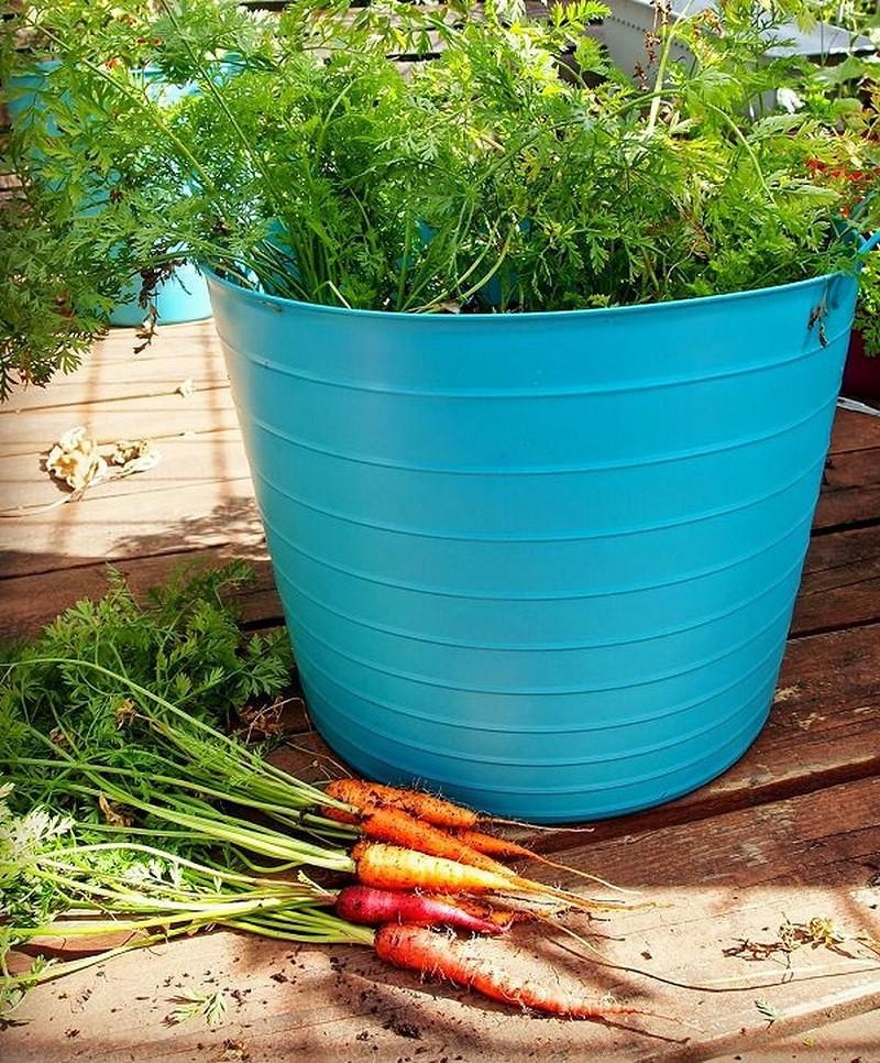 Cách trồng cà rốt tại nhà cực đơn giản, mùa nào cũng có cà rốt sạch để ăn - Ảnh 2.