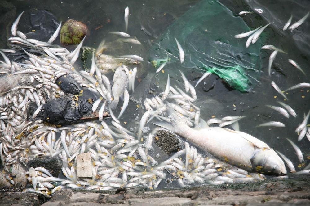Hà Nội: Người dân hốt hoảng vì hồ Tây cá lại chết nổi trắng góc hồ sau 1 đêm - Ảnh 2.