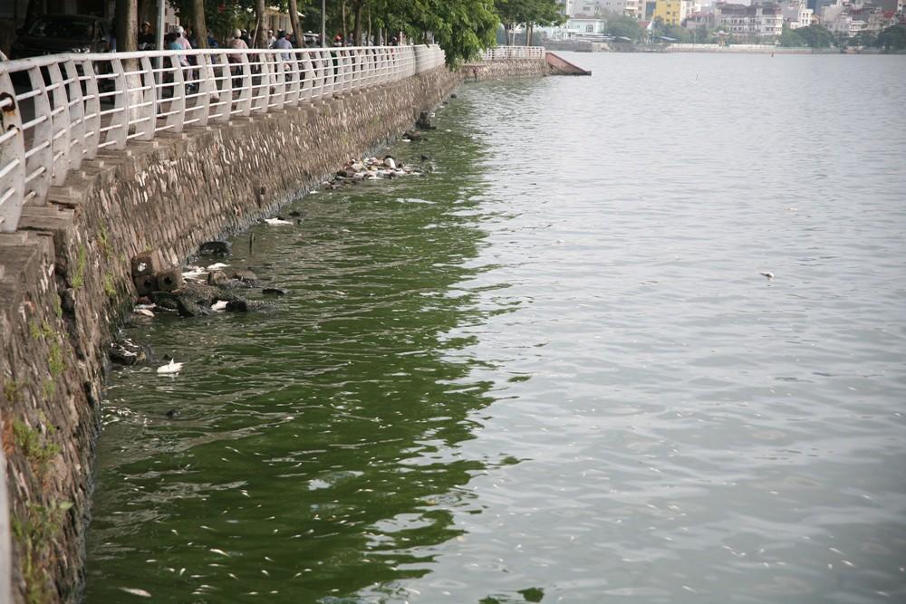 Hà Nội: Người dân hốt hoảng vì hồ Tây cá lại chết nổi trắng góc hồ sau 1 đêm - Ảnh 18.
