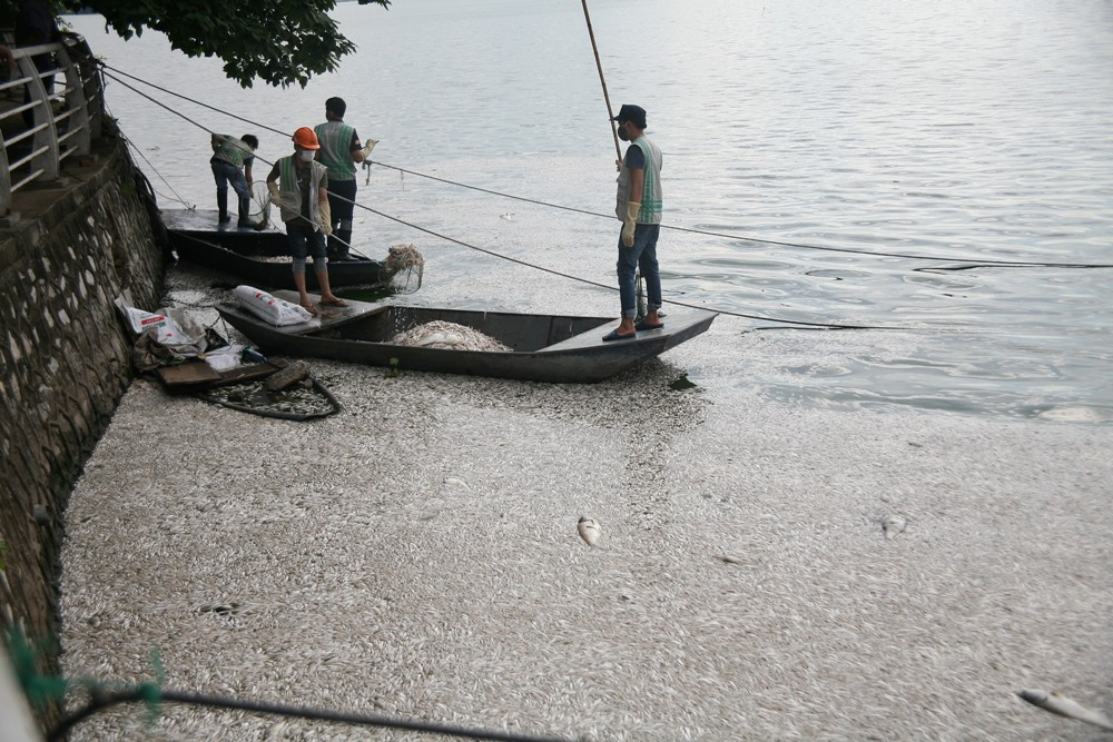 Hà Nội: Người dân hốt hoảng vì hồ Tây cá lại chết nổi trắng góc hồ sau 1 đêm - Ảnh 19.