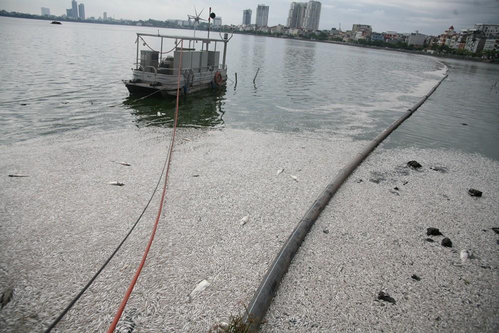 Hà Nội: Người dân hốt hoảng vì hồ Tây cá lại chết nổi trắng góc hồ sau 1 đêm - Ảnh 10.