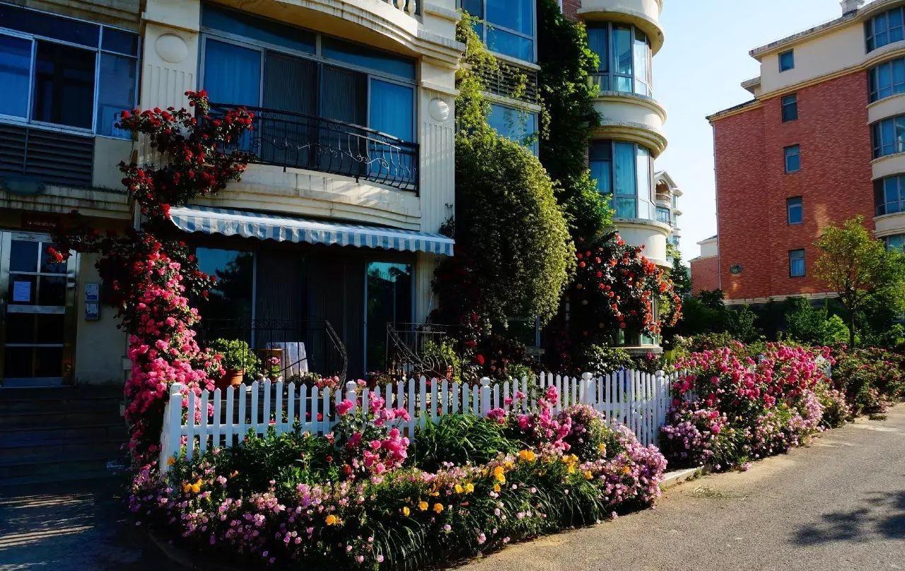 Ngôi nhà tràn ngập sắc hoa hồng ở thị trấn nhỏ của cô gái dành cả thanh xuân chỉ để trồng hoa làm đẹp nhà - Ảnh 4.