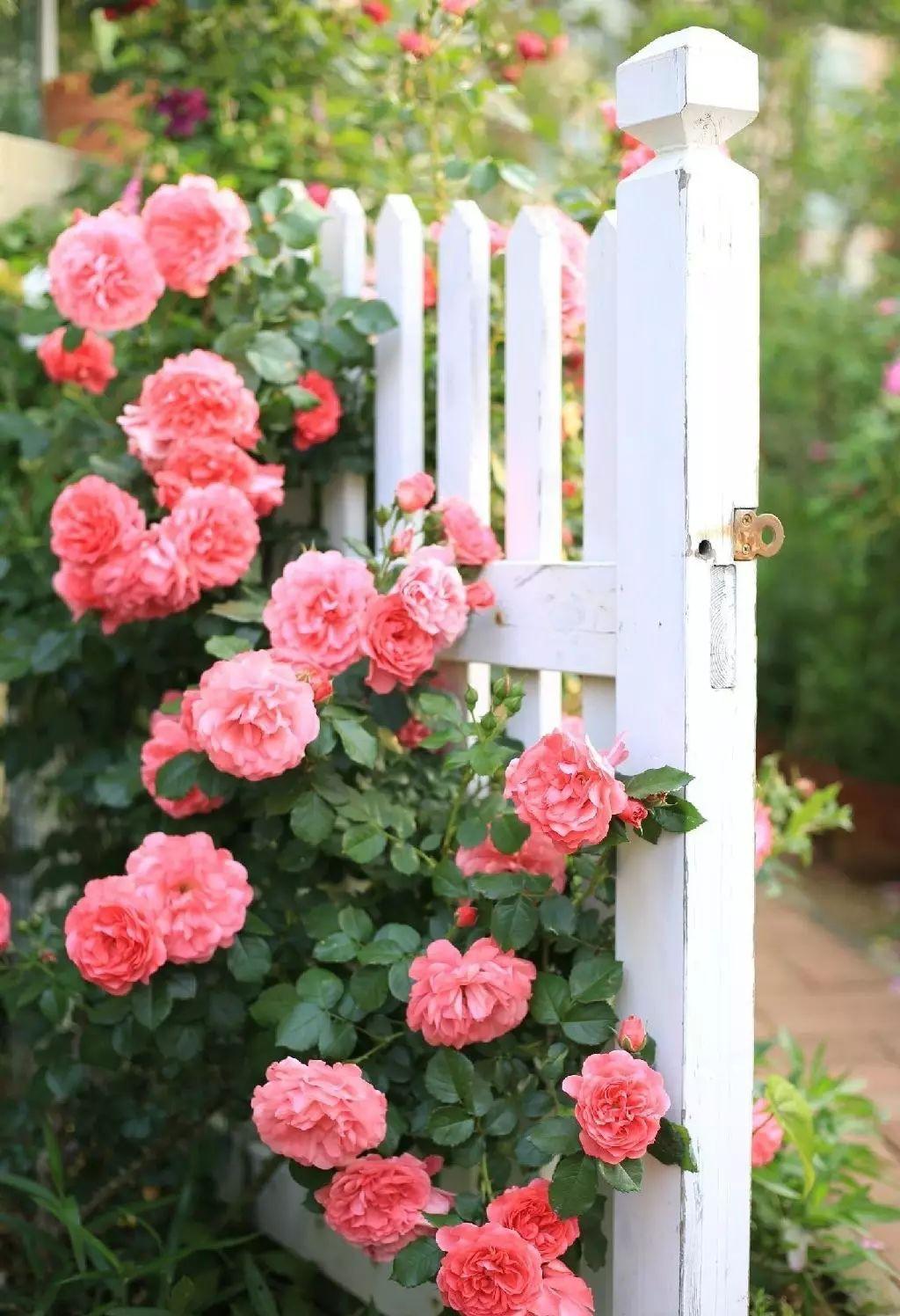 Ngôi nhà tràn ngập sắc hoa hồng ở thị trấn nhỏ của cô gái dành cả thanh xuân chỉ để trồng hoa làm đẹp nhà - Ảnh 17.