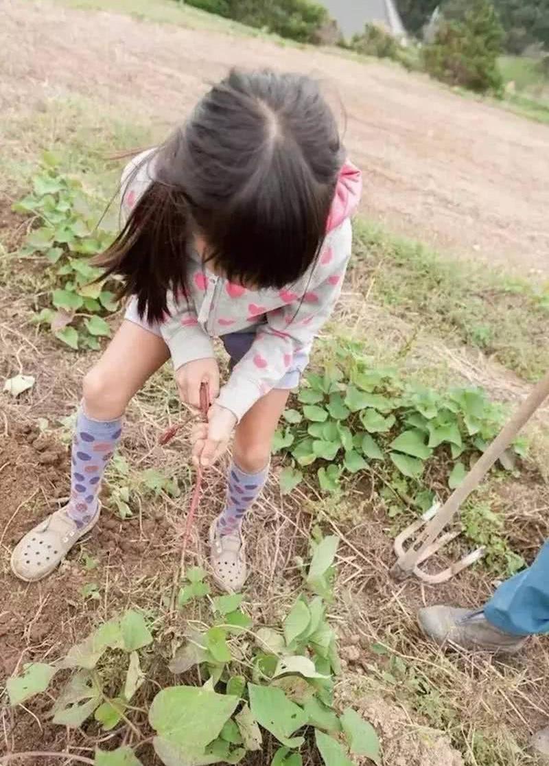 Nữ kỹ sư Nhật bỏ nhà phố, cùng gia đình về sống trong ngôi nhà nhỏ yên bình với vườn tược nơi thôn quê - Ảnh 13.