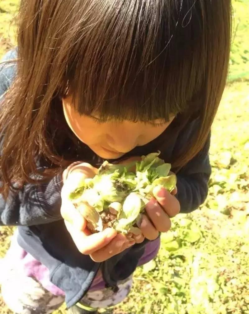 Nữ kỹ sư Nhật bỏ nhà phố, cùng gia đình về sống trong ngôi nhà nhỏ yên bình với vườn tược nơi thôn quê - Ảnh 12.