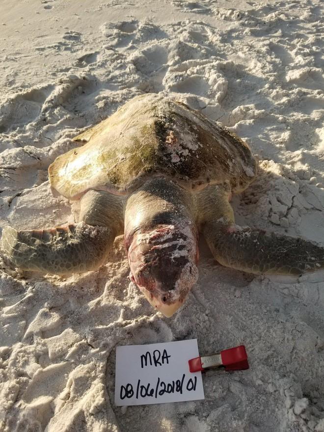Trong vòng 1 tuần: Gấu trắng ăn nylon, rùa biển cực hiếm chết kẹt trong ghế sắt và những bức hình gây ám ảnh từ rác thải của con người - Ảnh 1.
