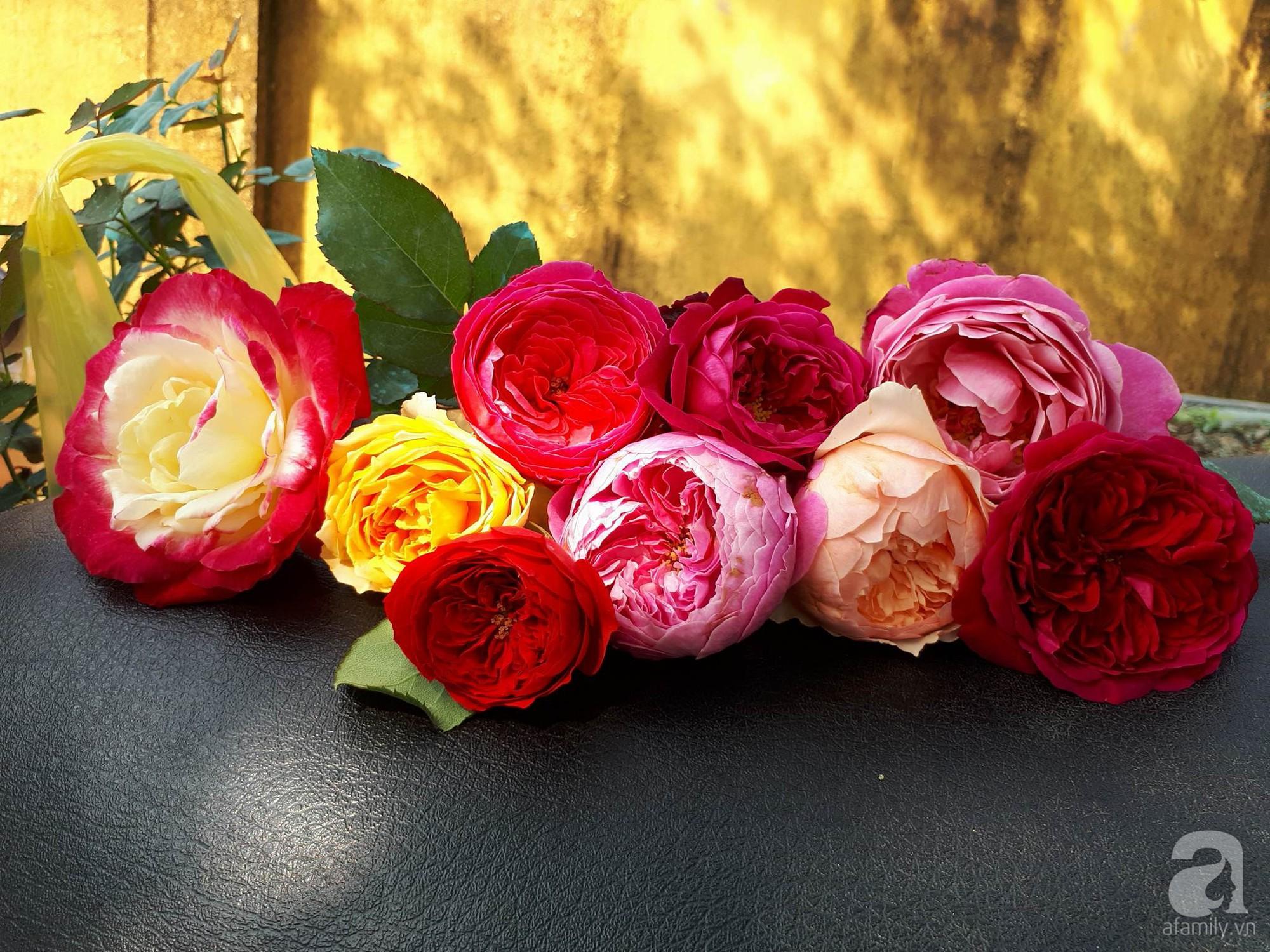 Ngôi nhà hoa hồng thơm ngát và rực rỡ với hàng trăm gốc hồng trên triền núi của cô giáo ở Cao Bằng - Ảnh 19.